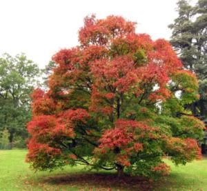 arbre à planter dans son jardin